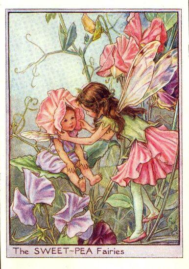 Sweet-pea_flower_fairy