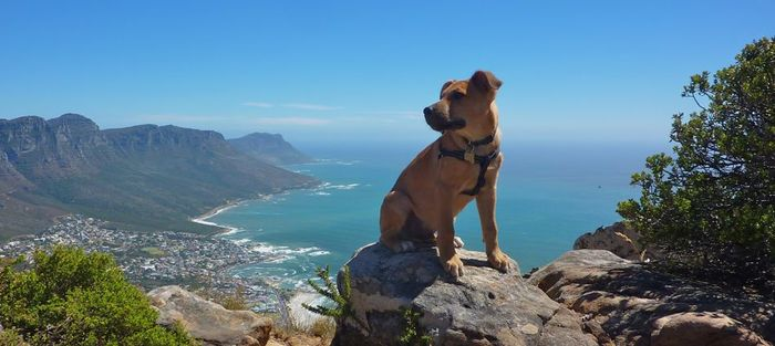 Bow-Wow-posing-on-the-summit-of-Lions-Head-Cape-Town
