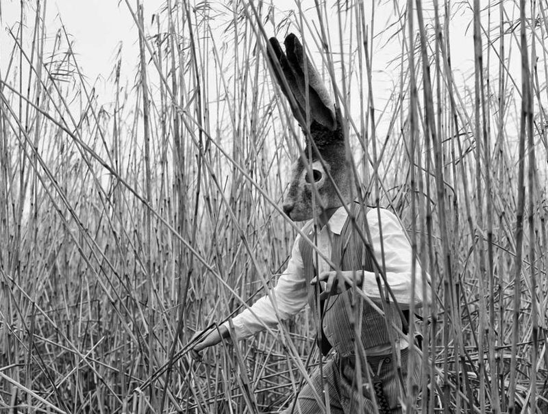 Hare-in-reeds1