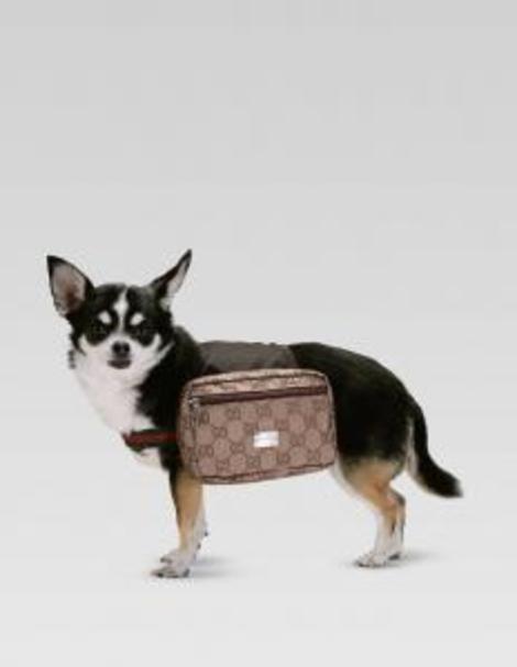 Guccidogbackpackthumbnail